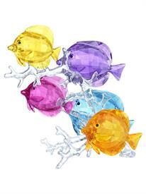 -,RAINBOW FISH FAMILY