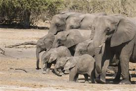 -,HERD OF ELEPHAN8X10WH