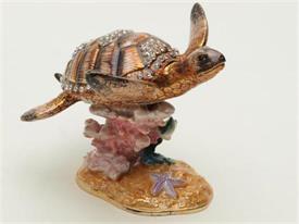 -1141704 BROWN TURTLE