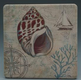 -DISCOVERY SHELLS COASTERS S/4 VARIETY OF SEASHELLS. 4X4 SQUARE.