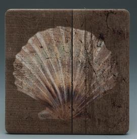 -BEACH PARK COASTERS S/4 SEA SHELLS INBROWNS AND TANS.4X4 SQUARE.