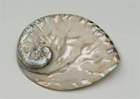 """-FINELY POLISHED SOUTH AFRICAN ABALONE. 5"""" LONG, 4"""" WIDE"""