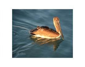 -PELICAN AT SUNSET FT. DESOTO 8X10 WITH 11X14 BLACK MAT
